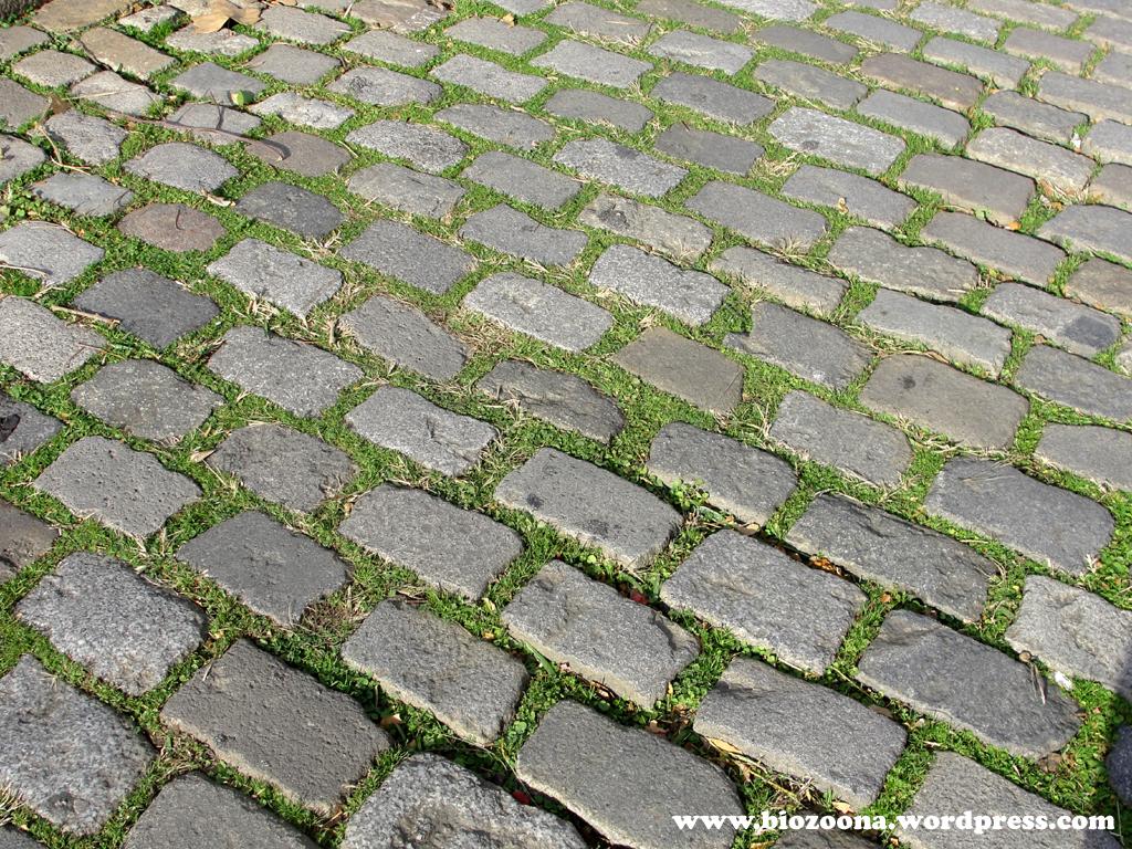 Adoquines materialterna for Losas de hormigon para jardines